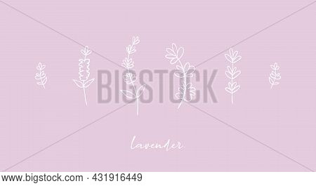Cute Aesthetic Hand Drawn Lavender Flowering Plants Set, Collection Of Pastel Violet Background.