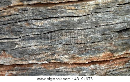wood background hardwood nature texture in thailand poster