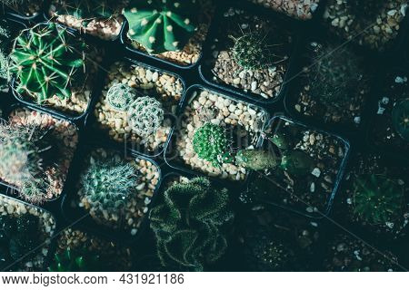 Top View Angle Of Various Small Cactus In Little Pots Processed In Vintage Film Color And Tone.