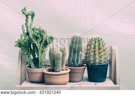 Rows Group Of Various Green Cactus In Clay And Plastic Pots On Wood Shelf.