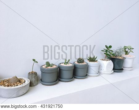 Collection Of Small Plant, Cactus And Succulent Plants In Ceramic Pots, Plants On White Shelf. Minim