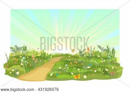 Rural Road Obliquely To Green Glade. Summer Meadow. Flower. Trail. Juicy Grass Close Up. Grassland.