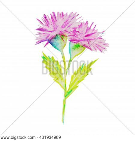 The Flower Blooms In Spring And Summer In Hot Countries It Grows Along The Road, A Pink Weed With A