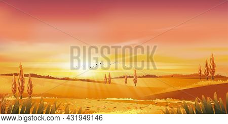 Autumn Rural Landscape In Evening Light With Sunset, Yellow,pink,orange Sky Background,vector Cartoo
