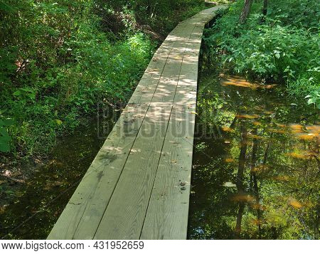 Board Walks Of The Wetlands Are Nature's  Walk Of Many Lives