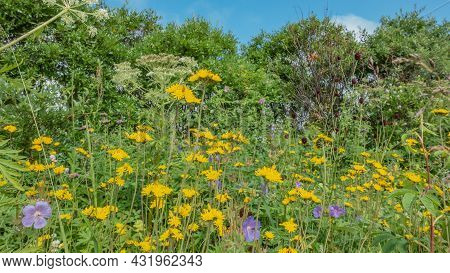 Bright Yellow, Purple, And White Wildflowers Grow In A Meadow Among Lush Grass. Green Trees Against