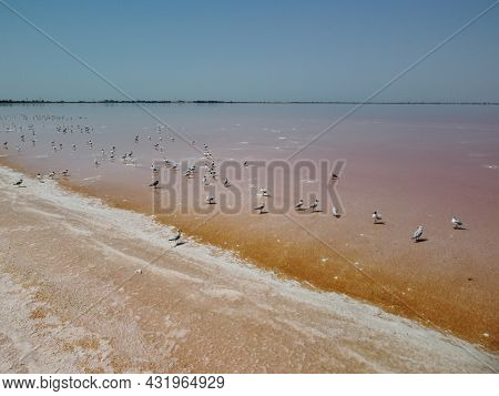 Flying Over Seagulls At Pink Salt Lake. Salt Production Facilities Saline Evaporation Pond In Salty