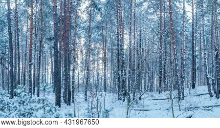 Leafless trees covered with snow. Beautiful winter background.