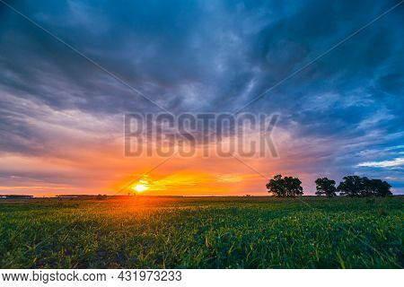 Landscape Of Green Maize Field Under Scenic Summer Dramatic Sky In Sunset Dawn Sunrise. Young Green
