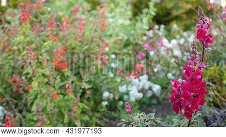 Colorful Wildflower Blossom, Spring Morning Meadow, Natural Botanical Background. Flower Delicate Bl