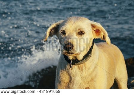 A Mixed Breed Dog Standing On Some Rocks By The Sea At Dawn.