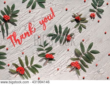Paper Text Thank You. Festive Decorative Natural Background, Fresh Natural Rowan Berry With Leaves O