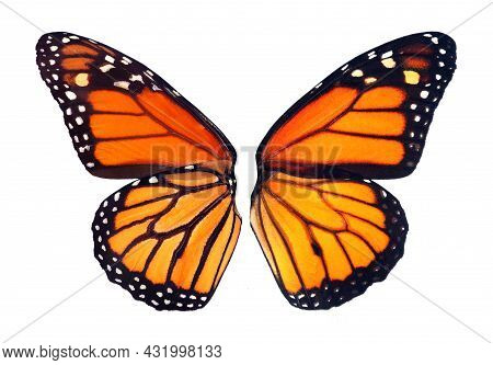 Monarch Butterfly Wings Isolated On White For Design. The Front And Back Of The Wings Of The Monarch