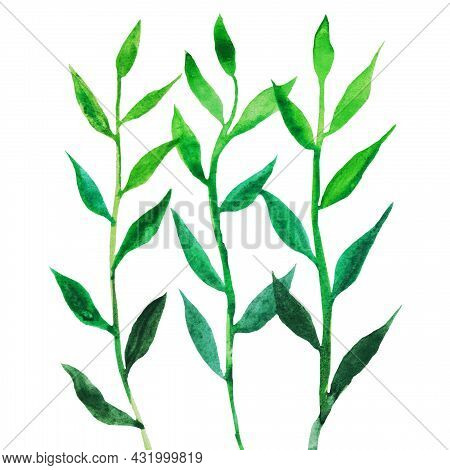 The Grass Is Green, The Stem With Petals Grows In Spring Pattern On A White Background