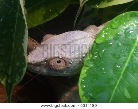 Nosey Be Female 033