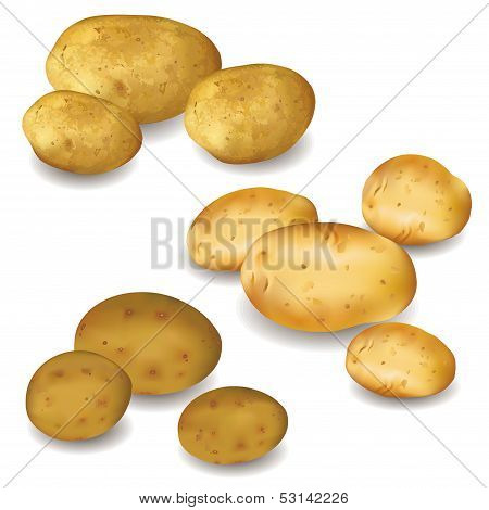 Set Of Vegetables Potatoes Isolated On White Background