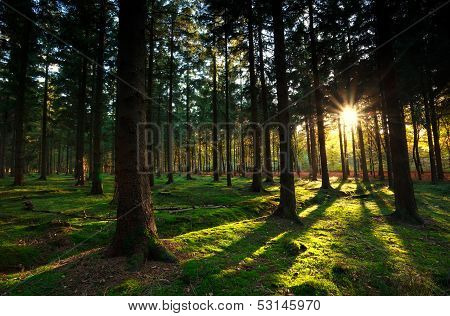 Warm Sunbeams In Autumn Forest