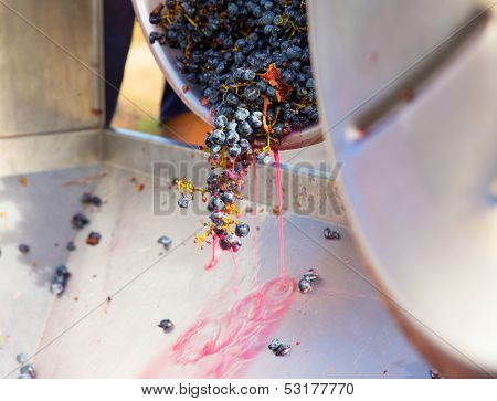 corkscrew crusher destemmer in winemaking with cabernet sauvignon grapes poster