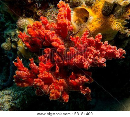 sponges with brittle star