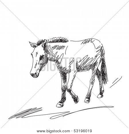 Hand drawn mule