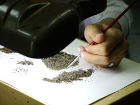 Micro Fossil Search