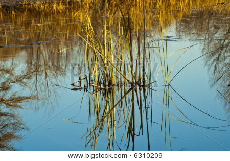 Pond reflection in Autumn