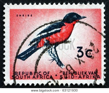 Postage Stamp South Africa 1961 Crimson-breasted Shrike, Bird