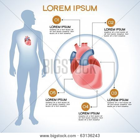 Heart. Modern medical infographics. Internal organs in a human body. Anatomy of people poster