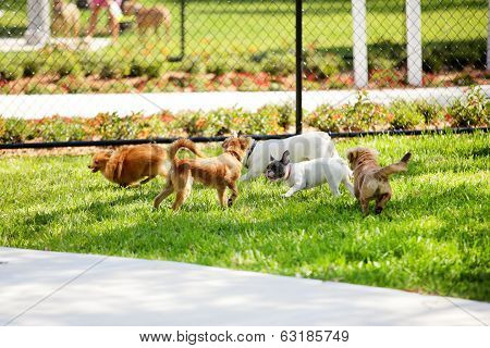 Stock image dogs playing in the park
