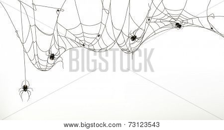 Spiders and spider web, vector set