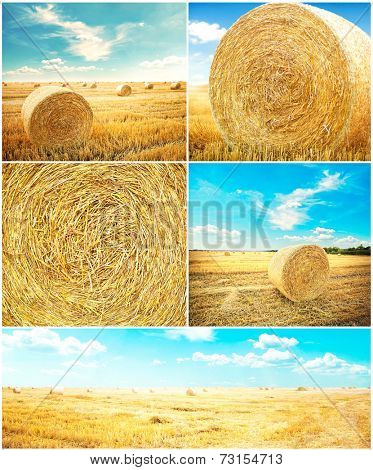 hay-roll on meadow. nature background