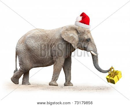 Big elephant with santa's cap delivering christmas gifts.