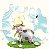 illustration, cow on glade with daisywheel on background milk poster
