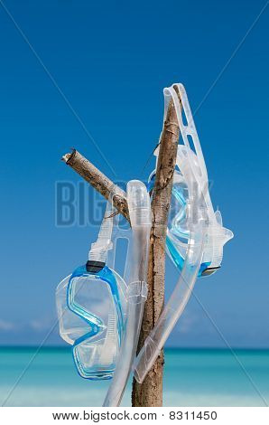 Diving Mask On Hanging On Branch