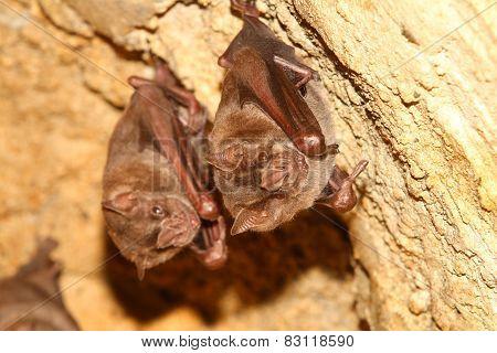 Bat Pair