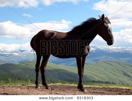 Black stallion against the backdrop of mountain valley poster