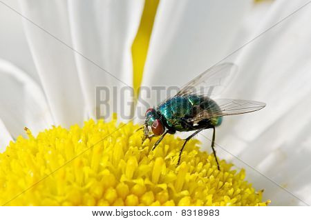 flying insect pollinating