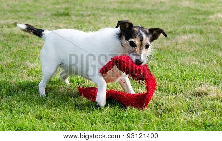 Dog Playing With Toy
