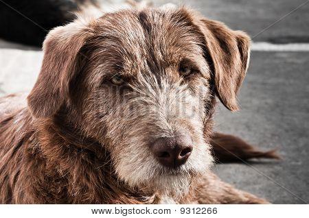 Abandoned dog on the street