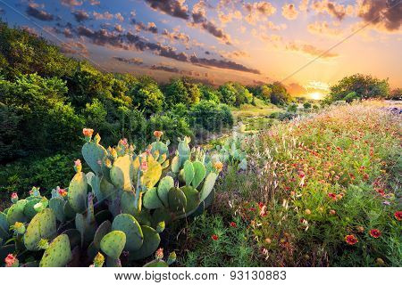 Cactus And Wildflowers At Sunset