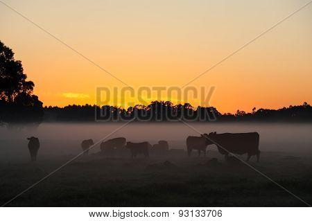 Day Dawns On The Farm
