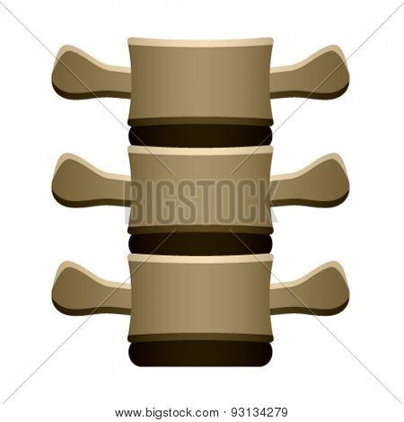 vector human spine vertebrae front view
