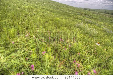 spring vegetation, Flint Hills