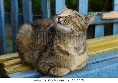 The Cat On The Bench