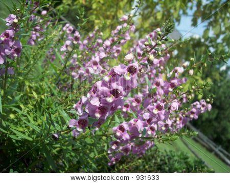 Small Purple Flowers2