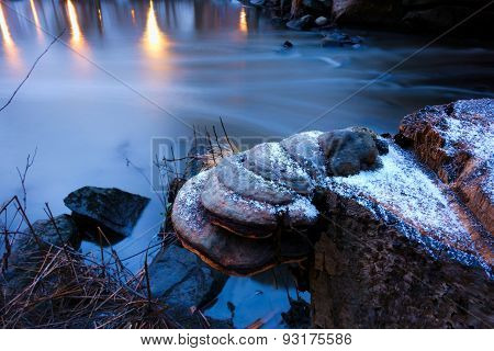 Tree stump with fungus and little snow flakes by the small river in Helsinki, Finland with reflections from the park lights in the water surface poster