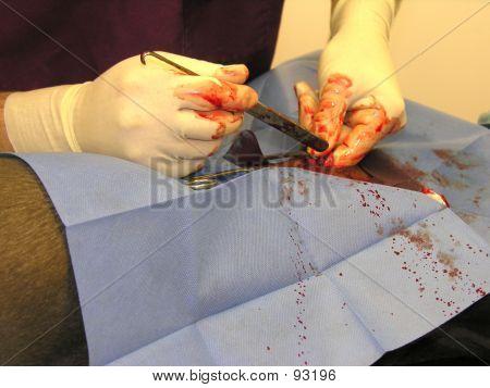 Vet Performing Surgery