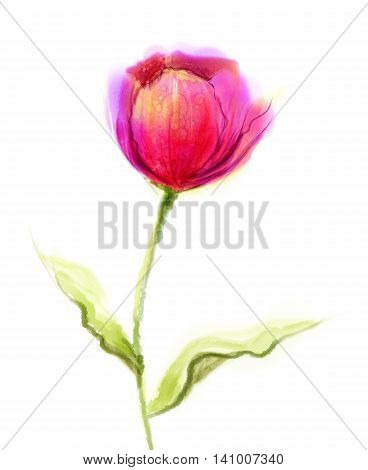 Watercolor painting pink, red tulip flower with green leaves on white paper background. Hand Painted still life of a single flower isolate on white background