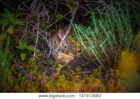 Scared Little Bunny Rabbit
