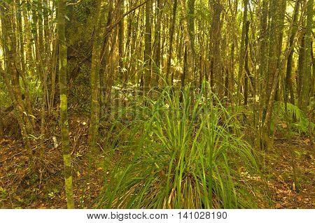 Lush forest Truman Track Coastline North Island New Zealand
